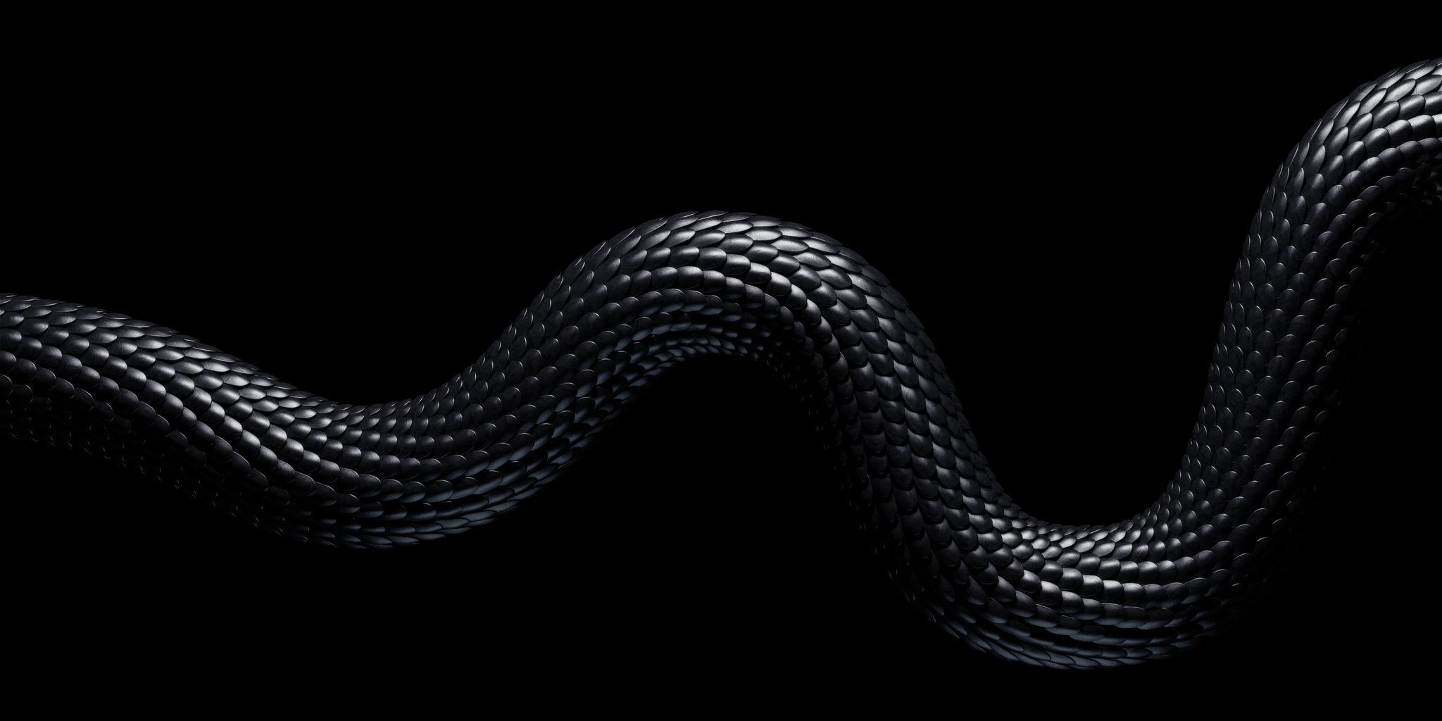 snake_came_A-(00200)