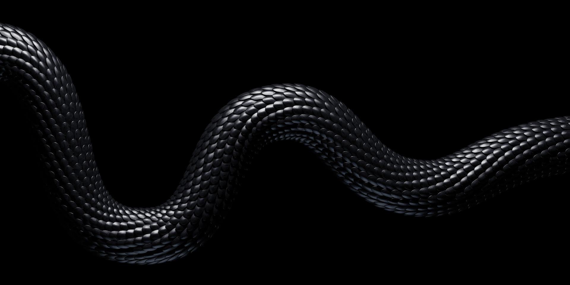 snake_came_B-(00200)